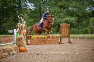 Horseback Riding Lessons in Erin, Ontario
