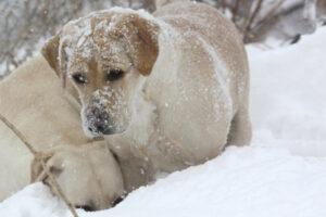 reno-snow-face4